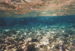 coralli-mare-egiziano